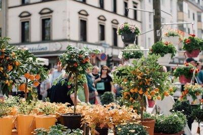 Stadt Neuwied Neuwieder Gartenmarkt